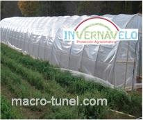 macro túnel de cultivo