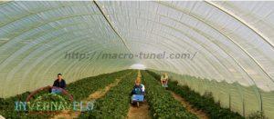macro túnel protección para hortalizas
