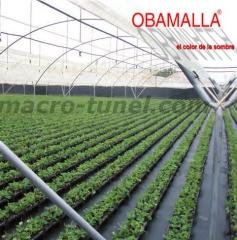 producción agrícola en invernadero